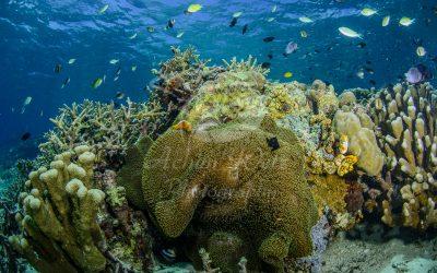 Clownfish 6912