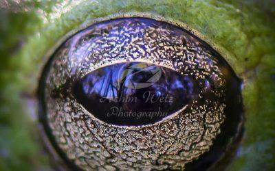 The Eye 0821