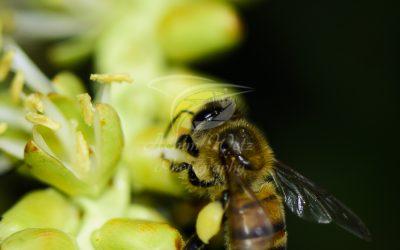 Bee 6401
