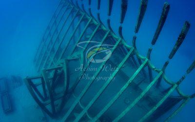 Moua Coral Greenhouse 2663