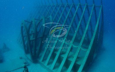 Moua Coral Greenhouse 2664