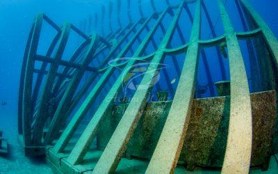 Moua Coral Greenhouse 2700