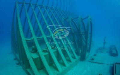 Moua Coral Greenhouse 2704