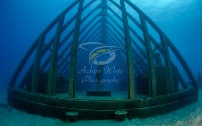 Moua Coral Greenhouse 2713